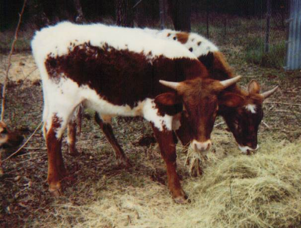 March 98, eating hay
